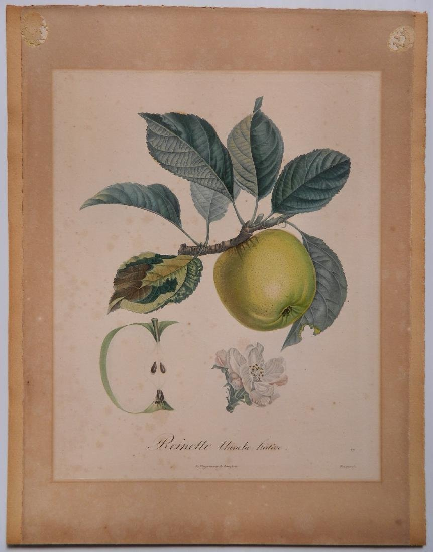 Pair of Botanical prints - 2