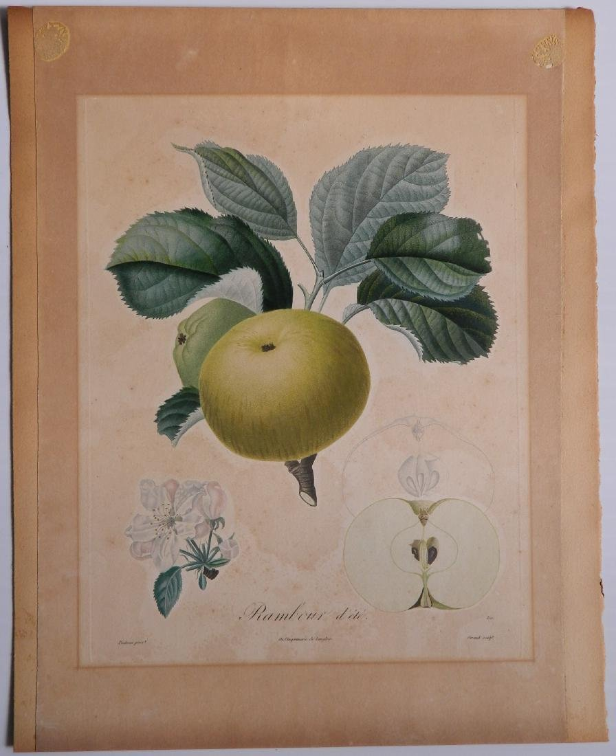 Pair of Botanical prints - 4