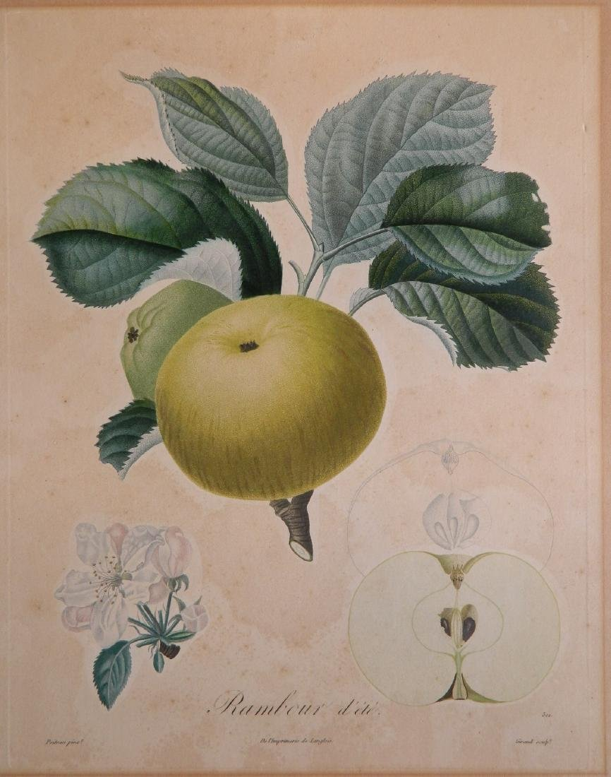 Pair of Botanical prints - 5