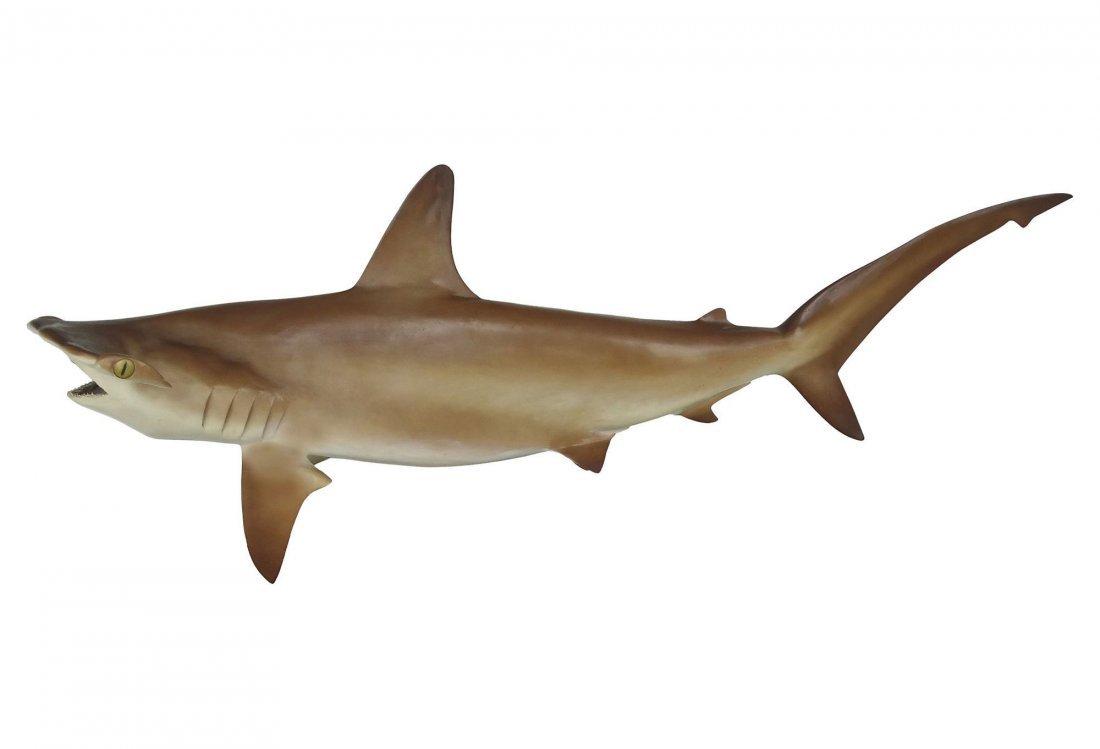Full Size Taxidermy Hammerhead Shark Mount