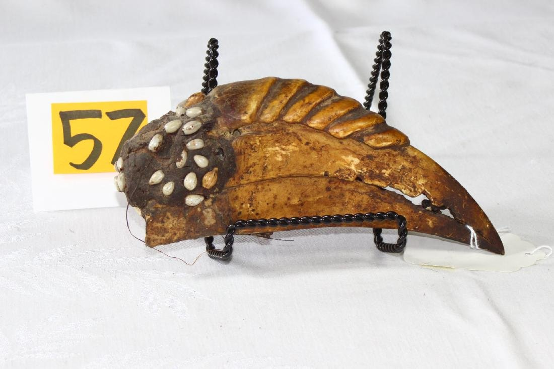 Papua New Guinea Hornbill Beak Shell Decorated