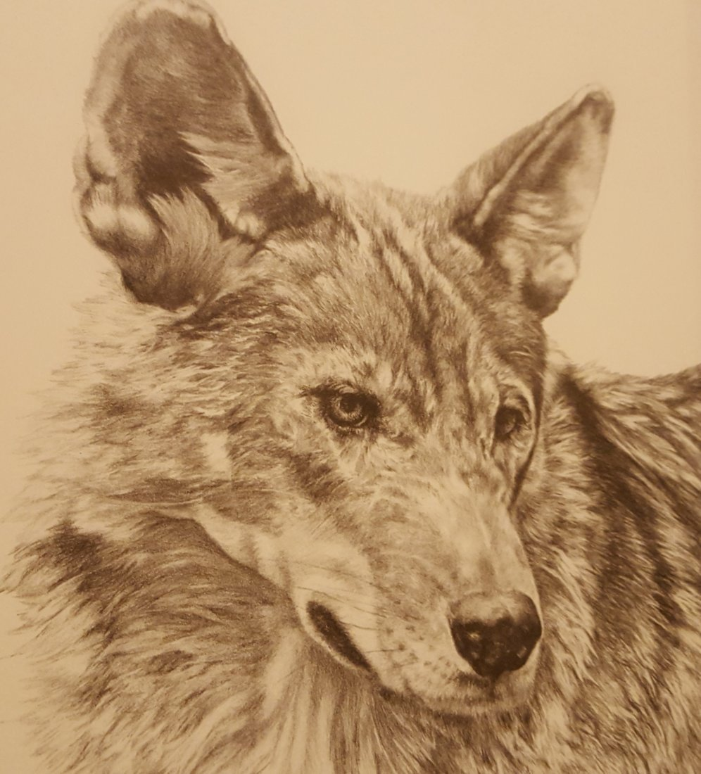 LANGFORD Signed and Framed Wolf Print - 3