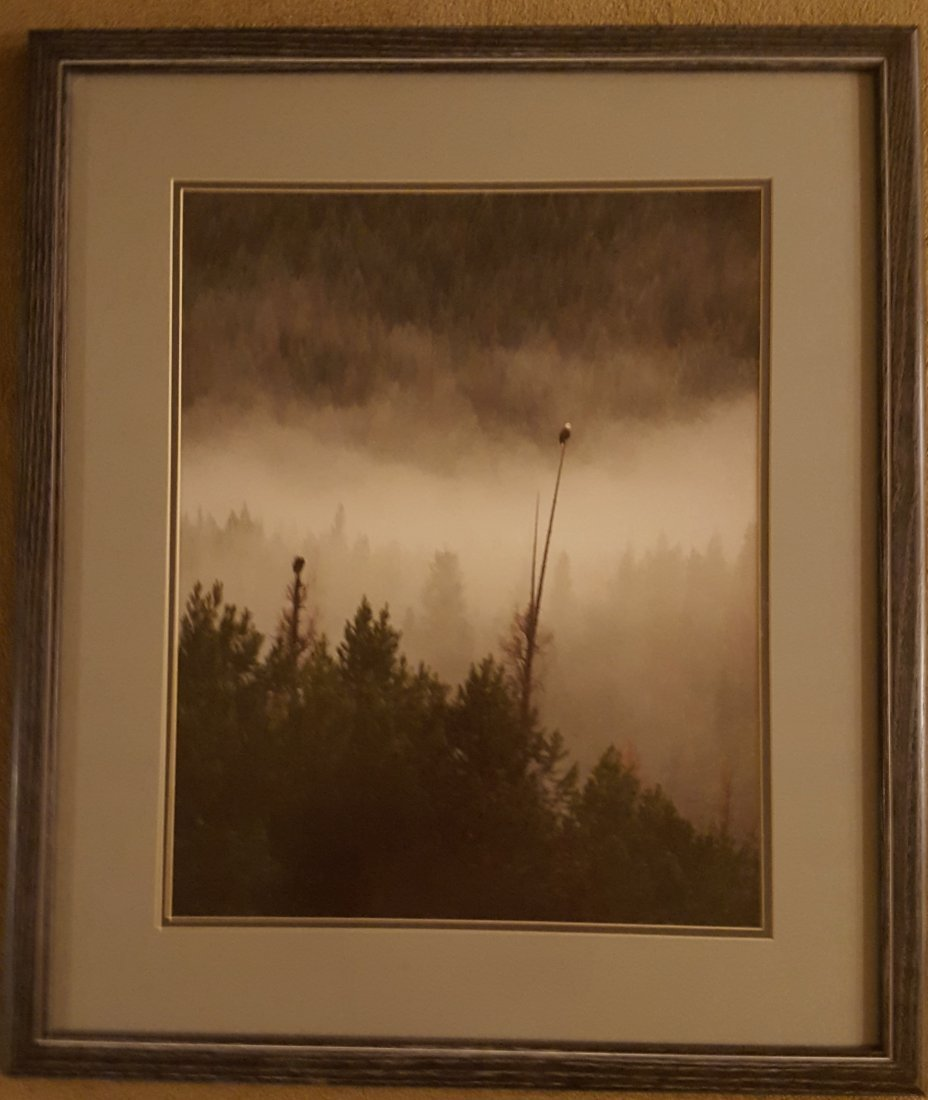 PHOTOGRAPH Framed Two Bald Eagles