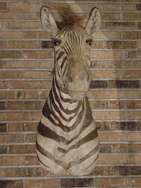 1: Zebra head mount
