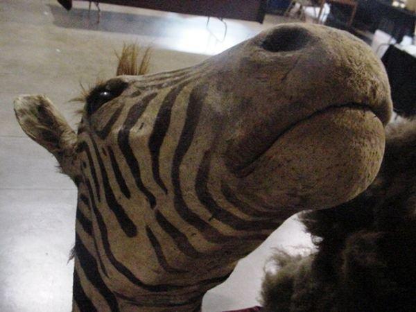 1: Zebra head mount - 4