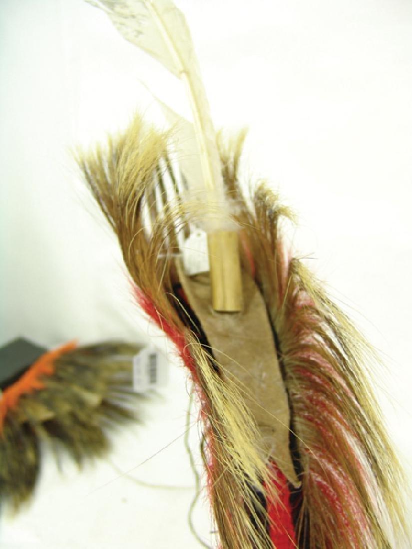 Plains Dancer's Roach - 6