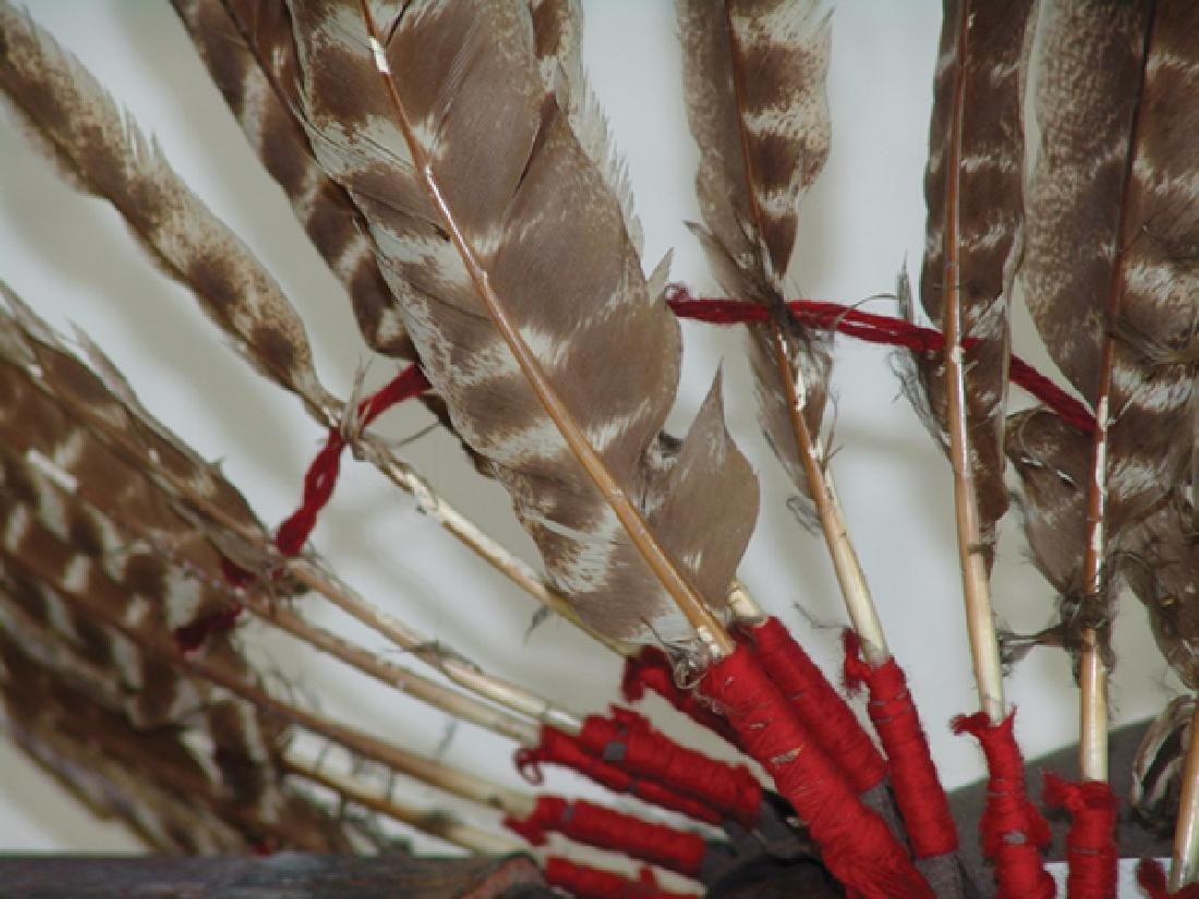 Feather Headdress Display - 4