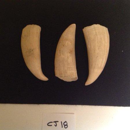 Whale Teeth - 2