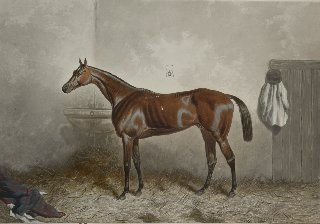 21: After Harry Hall GLADIATEUR aquatint engraved by J