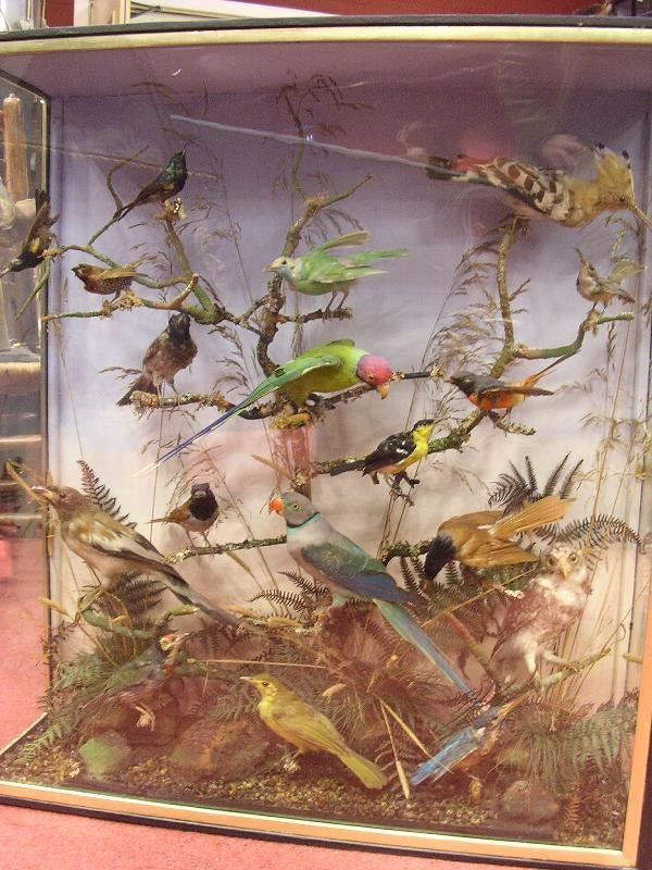 1437: A DISPLAY OF TROPICAL BIRDS IN A TREE BRANCH, INC