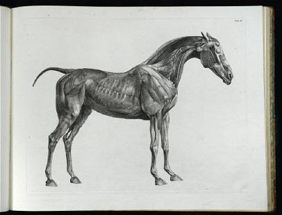 STUBBS (George) The Anatomy of the Horse, first edition