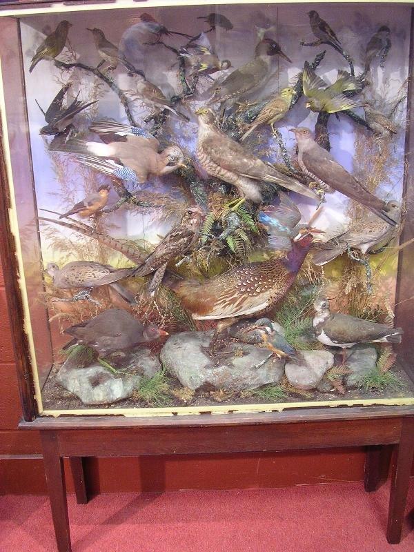1245: A CASE OF ENGLISH GARDEN BIRDS, ON A