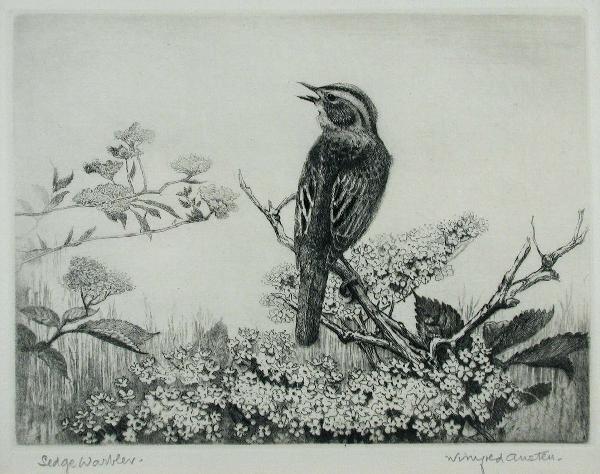 456: WINIFRED MARIE LOUISE AUSTEN (BRITISH, 1876-1964)