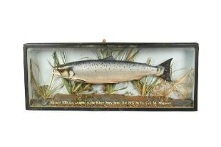 A mid20th century mounted salmon trophy dated 1937