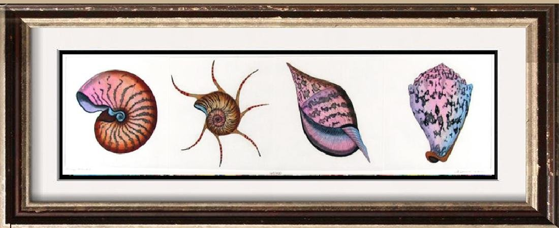 Sea Shells Hand Colored Etching Huge Sale
