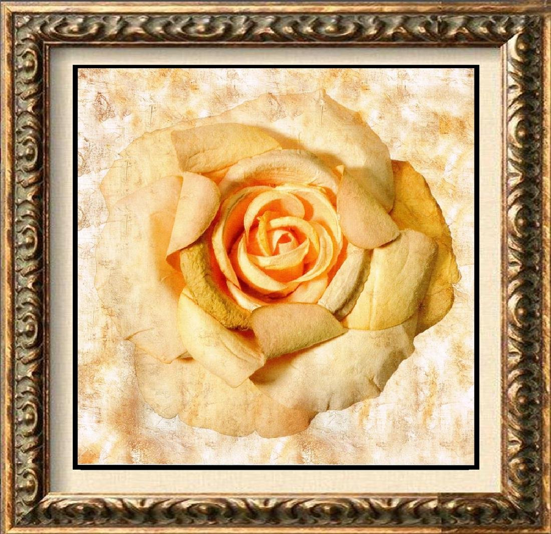 Pink Rose LARGE Giclee Canvas GREAT BUY