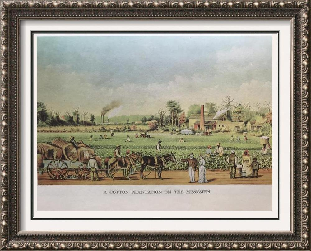 The Mississippi: A Carton Plantation On The Mississippi