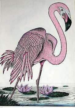 201813: FLAMINGO PINK ETCHING HAND SIGNED LTD ED SALE