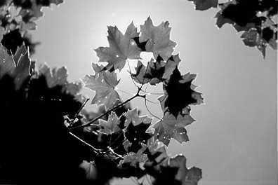 1010011: FANTASTIC SKY VIEW PHOTO SIGNED LTD ED BLACK &