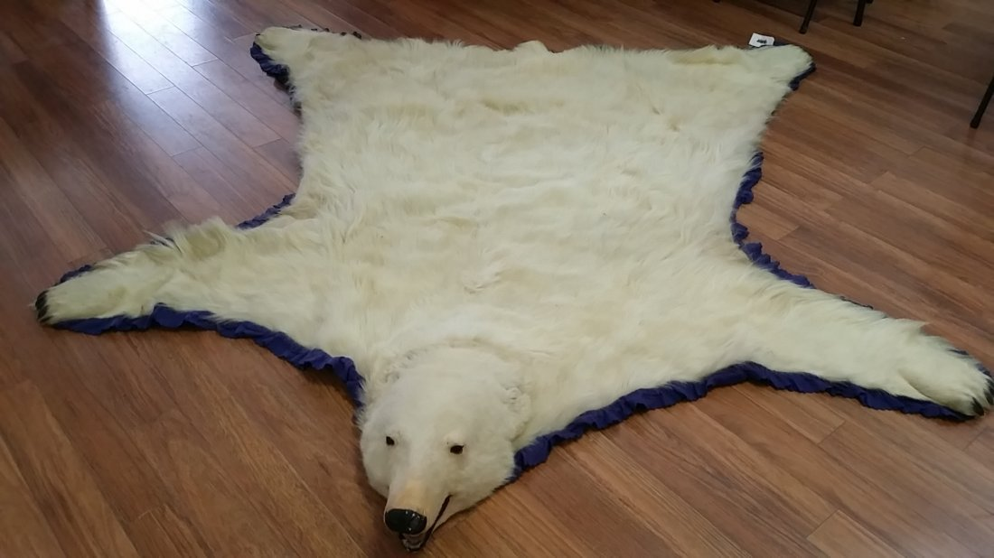 Real Polar Bear Skin Carpet  8'