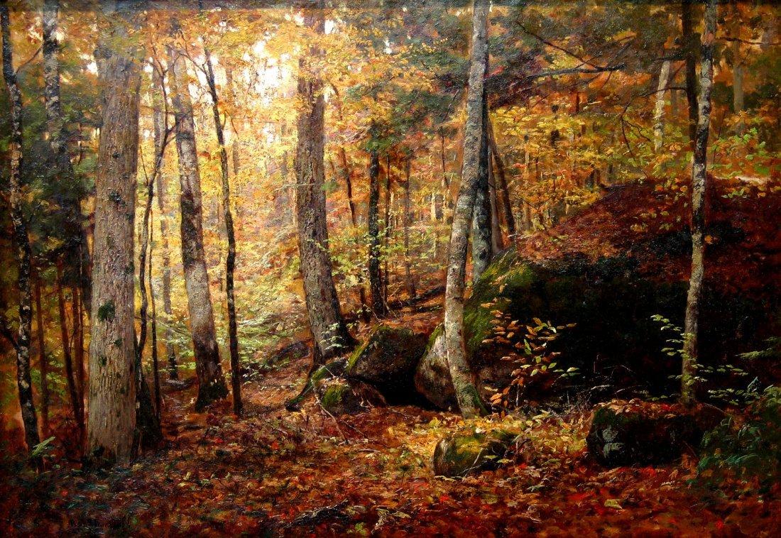 Forest Interior Scene Keene Valley Adirondacks