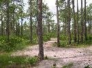 13B: Polk County, Fl - 1.25 Acres - High Bid Wins!!