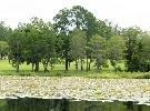155: SUWANNEE COUNTY, FL - 50' x 100' - Bid on Down Pmt