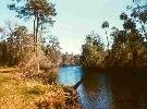 13C: Levy County, FL - .30 Acres - High Bid Wins!!