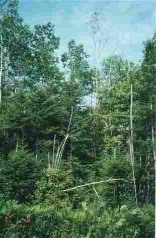 Douglas County, WI - 25' X 100' - Hign Bid Wi