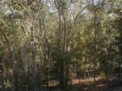 1: Putnam County, Florida Residential Lot