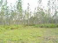 3: Polk County, Florida