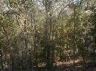 201: PUTNAM COUNTY, FLORIDA
