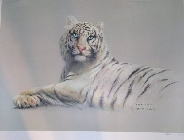 257D: Spencer Roberts, 'White tiger', photographic repr