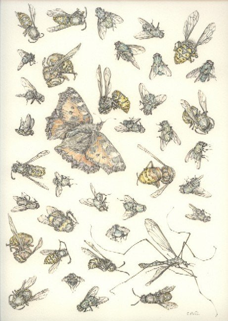 52C: Caroline Ali, 'Insects' (Feb 2007), pencil and wat