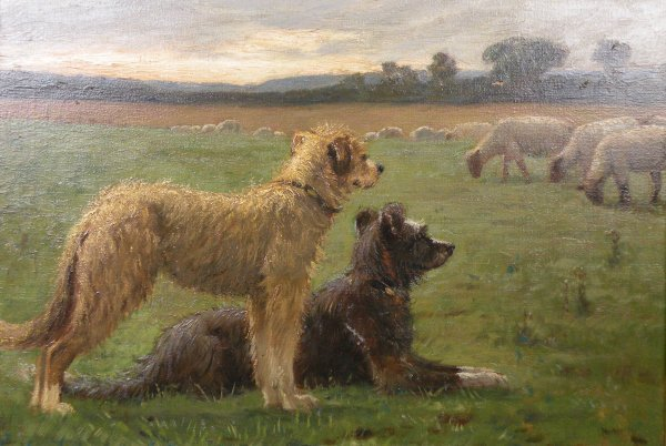 13B: Alfred Elias,  'Two sheep dogs guarding the flock'