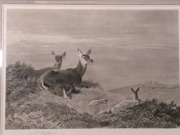 317C: Archibald Thorburn, 'Red deer and fawn', photogra