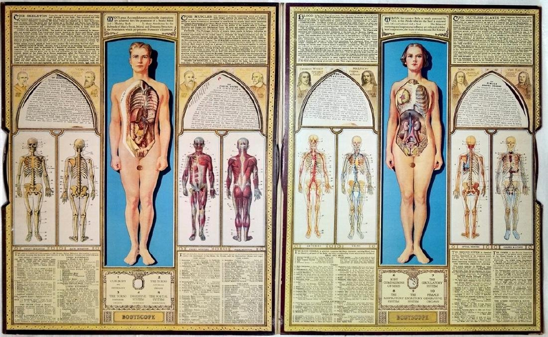 Bodyscope Anatomy Volvelle Art Deco Guide. 1948 - 3