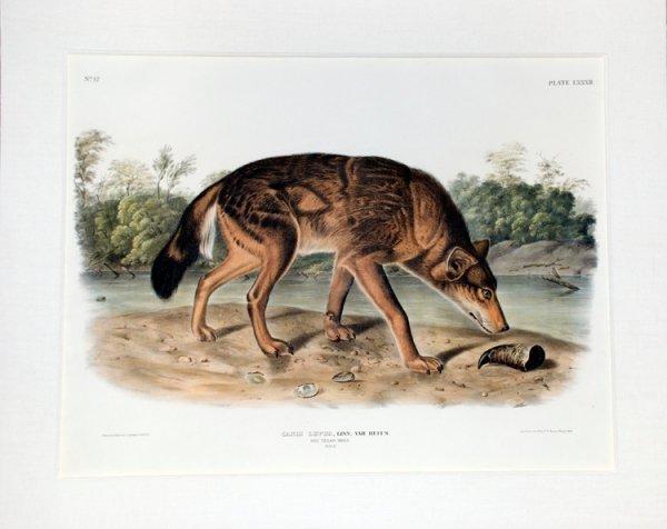22: AUDUBON, J[ohn] J[ames]. Canis Lupus....
