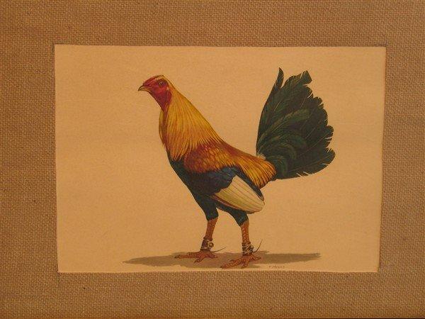 11: Fred MacCaleb - A Pair of Cocks