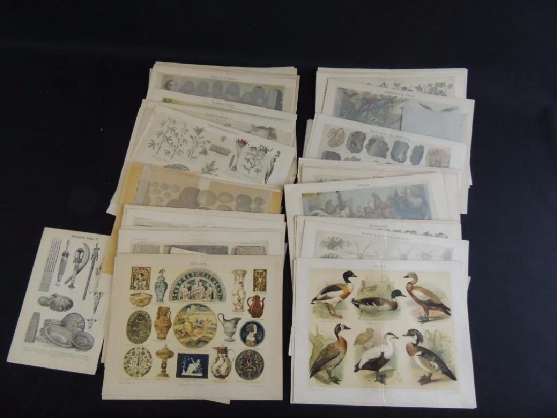 Large Group of Prints Featuring Animals, People,