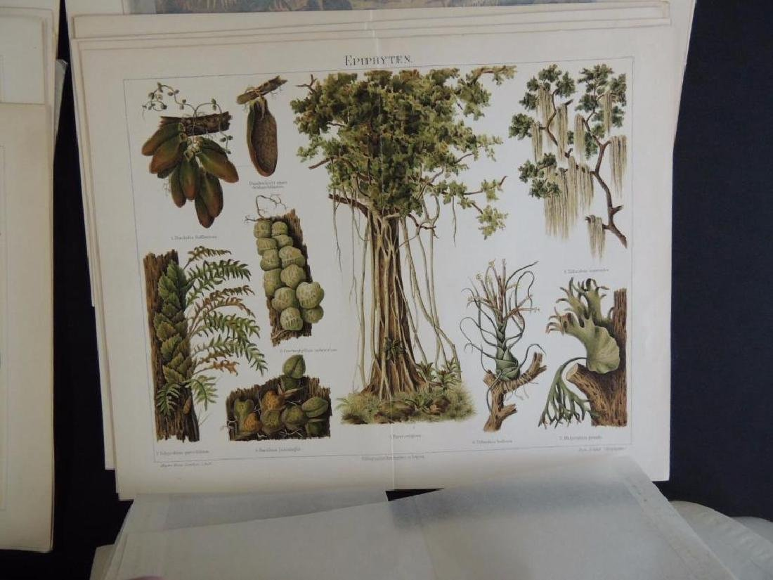 Large Group of Prints Featuring Animals, People, - 2