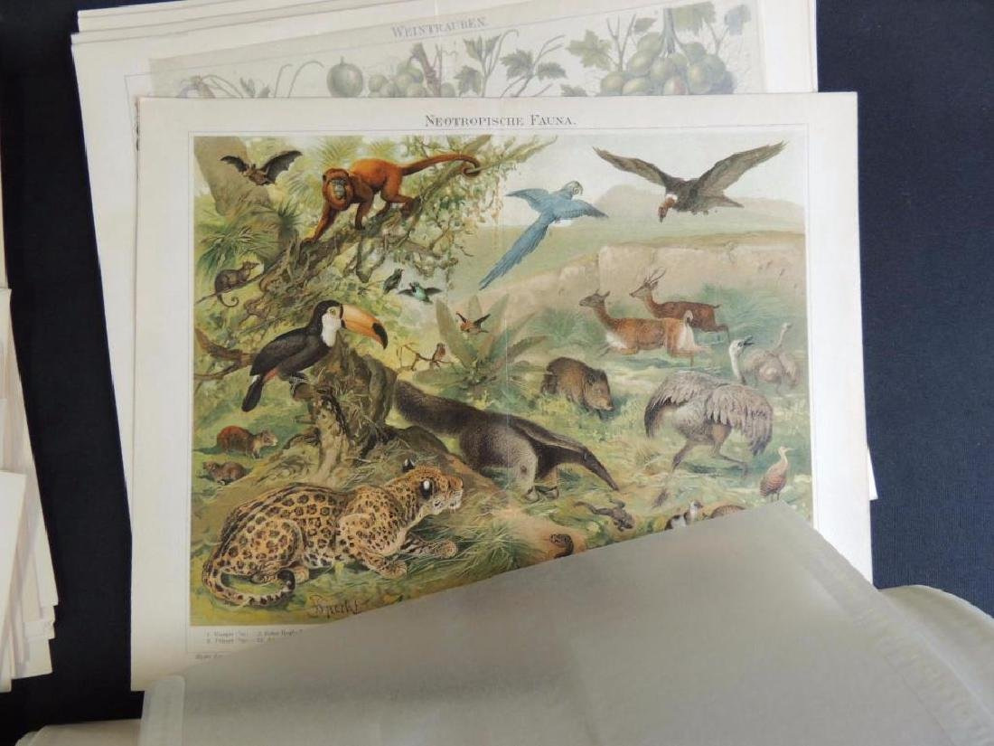 Large Group of Prints Featuring Animals, People, - 6