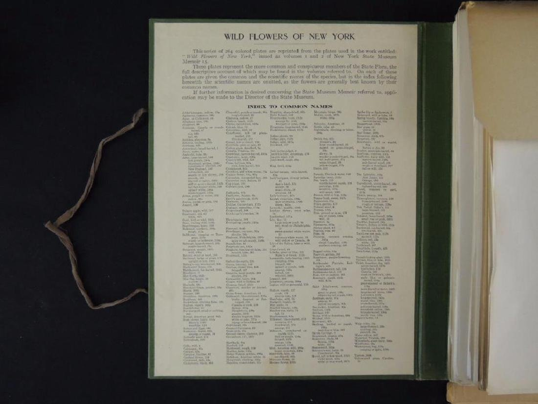1921 Wild Flowers of New York Plate Book - 2