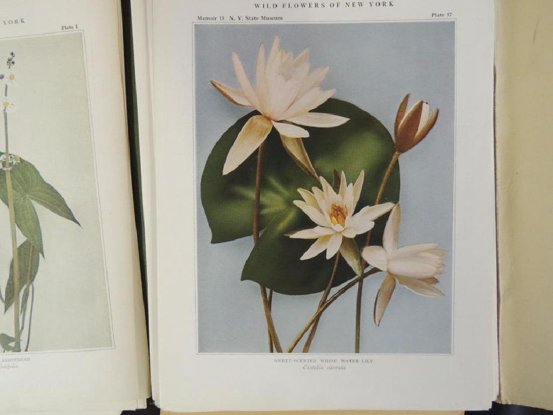 1921 Wild Flowers of New York Plate Book - 3