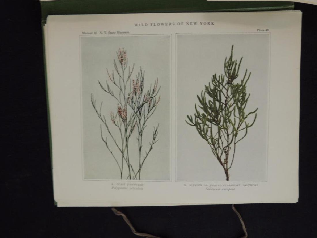 1921 Wild Flowers of New York Plate Book - 6