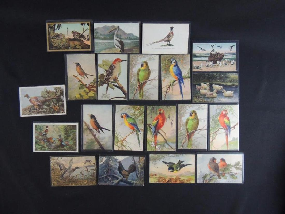 Group of 20 Bird Postcards