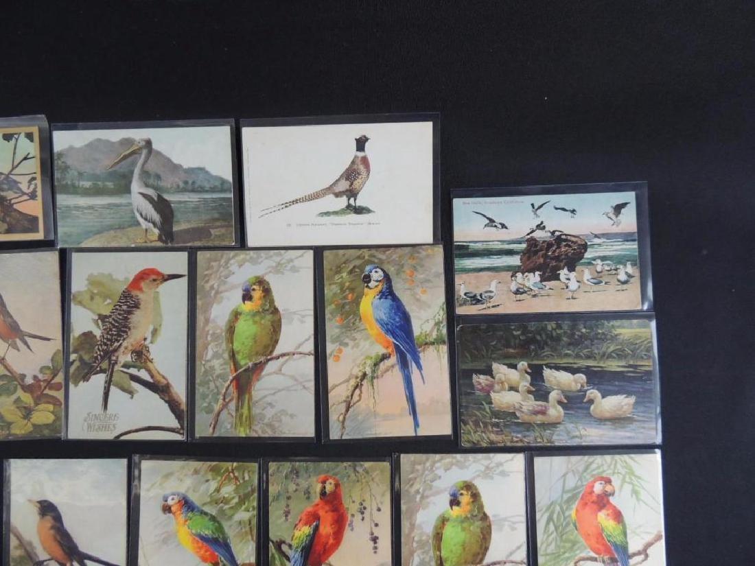 Group of 20 Bird Postcards - 2