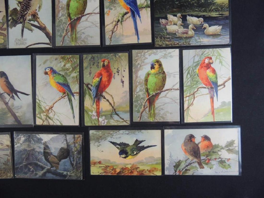 Group of 20 Bird Postcards - 3