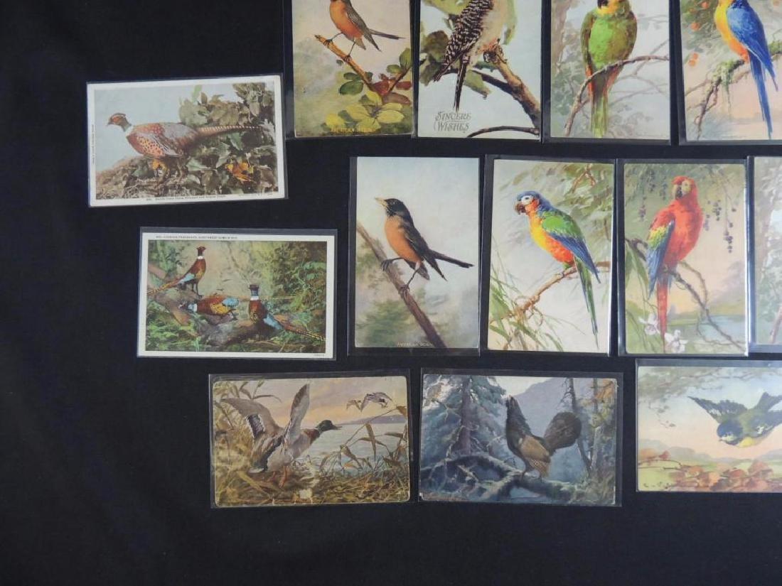 Group of 20 Bird Postcards - 4