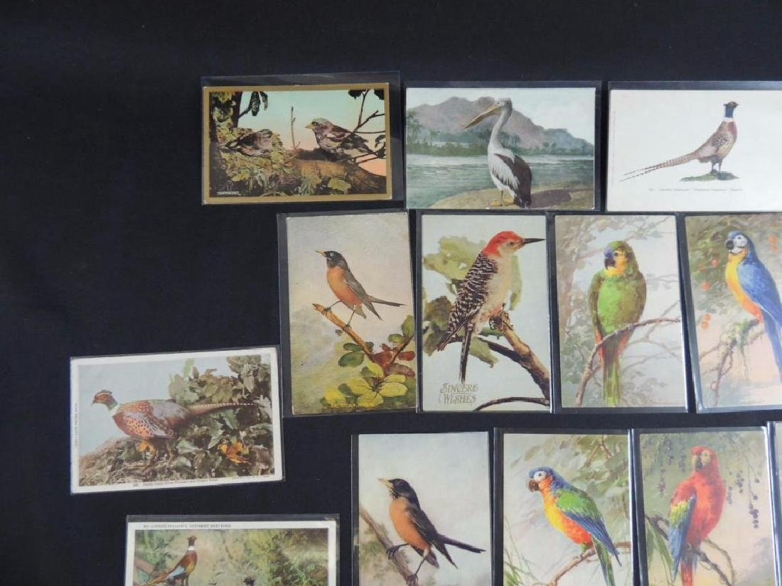 Group of 20 Bird Postcards - 5
